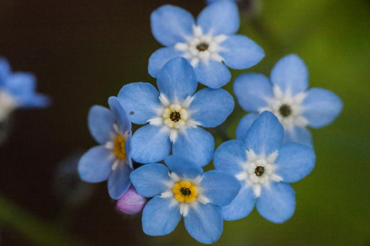 Pienten Lapin kukkien jahti – VotoVoorumi