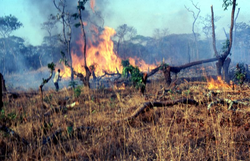 kaskenpolttoa Sambiassa.jpg