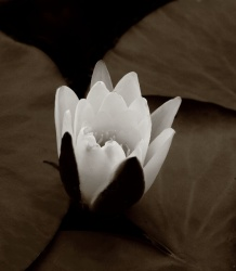 kasvi4.jpg