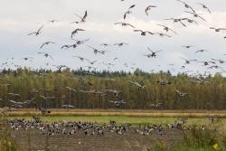 20150923-IMG_6782_Valkoposkia Oravilahden pelloilla.jpg